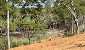 Itaguaçu da Bahia - Vegetação do Povoado de Almas em Itaguaçu da Bahia-BA-Foto:MMAlencar