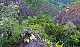 Lumiar - Lumiar-RJ-Bromélias na Pedra Riscada-Foto:Osmar de Castro