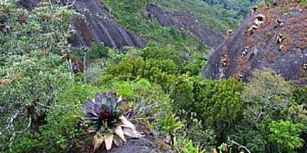 Lumiar-RJ-Bromélias na Pedra Riscada-Foto:Osmar de Castro