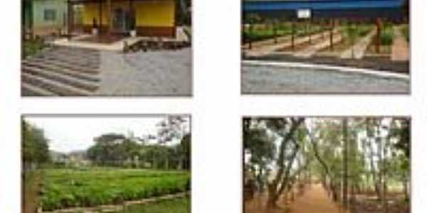 Horto Municipal Chico Mendes