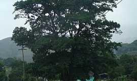 Sana - Sana-RJ-Árvore frondosa na estrada-Foto:Paulo Noronha