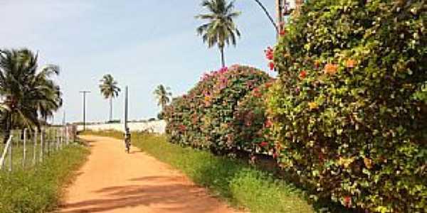 Coruripe-AL-Caminho para a Praia Lagoa do Pau-Foto:Roldao M