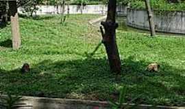 Volta Redonda - Volta Redonda foto Flvmen fulmini flexit