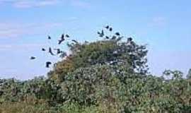 Ipanguaçu - Natureza-Foto:ipanguacuemdia.zip.net