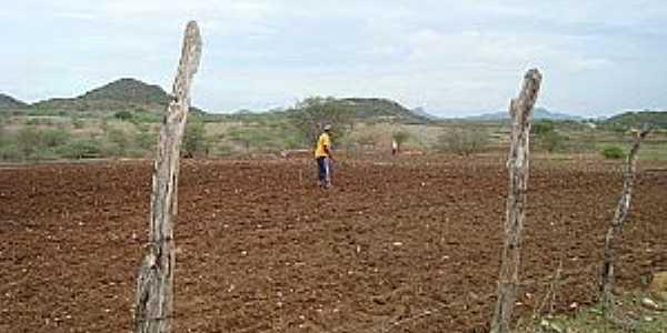 Ipiranga-RN-Sertanejo preparando a terra-Foto:Ewerton
