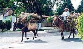 Martins - Transporte animal em Martins-Foto:Agacê Di Oliveira