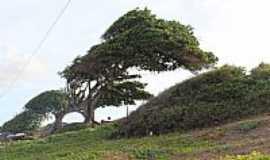 Maxaranguape - Maxaranguape-RN-Árvore do Amor-Foto:Wilson Alcaras