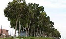 Natal - Natal-RN-Bosque dos Eucal�ptos-Candel�ria-Foto:Marcus Sampaio