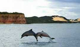 Natal - Natal-RN-Golfinhos na Praia da Pipa