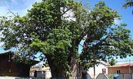 Nísia Floresta - Nísia Floresta-RN-Velho Baobá-Foto:Marcus Sampaio