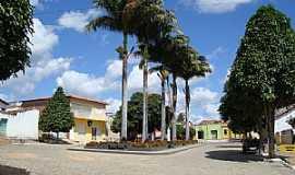 Portalegre - Portalegre-RN-Palmeiras na Pracinha-Foto:Walter Leite
