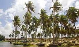 Rio do Fogo - Rio do Fogo-RN-Coqueiros na Praia-Foto:Wilson Alcaras