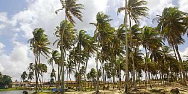 Rio do Fogo-RN-Coqueiros na Praia-Foto:Wilson Alcaras