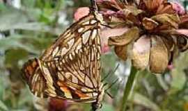 Tenente Laurentino Cruz - Acasalamento das borboletas por Avelino de Macêdo