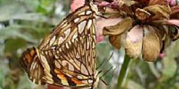 Acasalamento das borboletas por Avelino de Macêdo