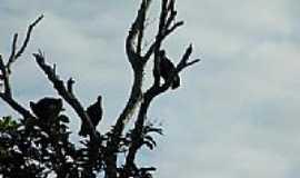 Calama - Urubus-Foto:douglaspaschoal