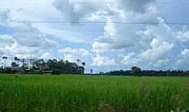 Cerejeiras - Planta��o de arroz-Foto:valdecirbairros