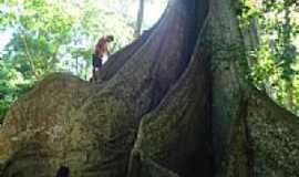 Cerejeiras - Tronco da árvore-Foto:valdecirbairros