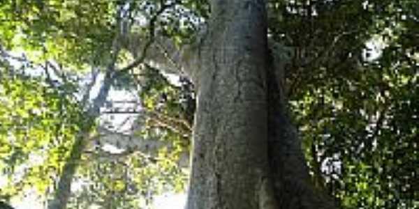 Árvore-Foto:valdecirbairros