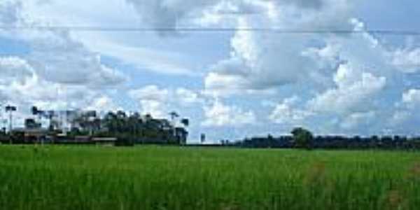 Plantação de arroz-Foto:valdecirbairros