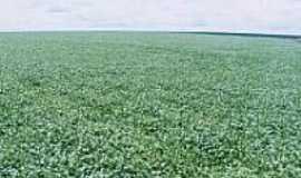 Colorado do Oeste - Plantio de Soja no Cerrado