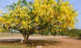 Primavera de Rondônia - , Por Gabinete da Prefeita