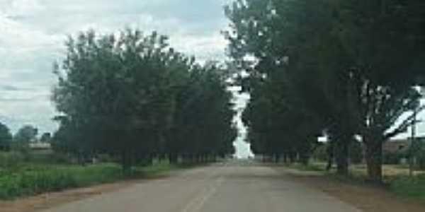 Rodovia arborizada na entrada de Vila Extrema-Foto:cbmatos