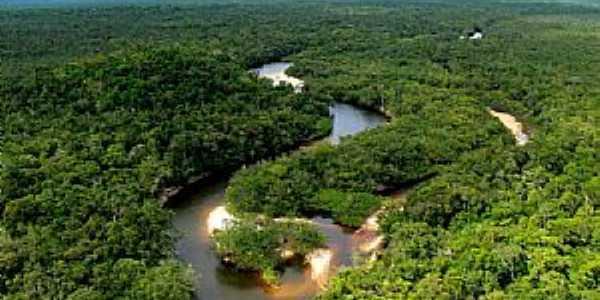 Caracara�-RR-Rio �gua Boa do Univini-Foto:TaylorNunes