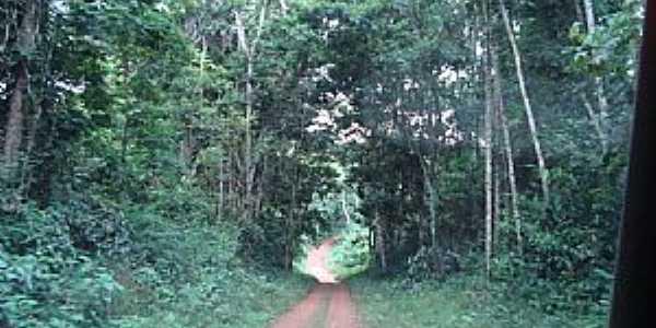 Caracara�-RR-Trilha Ecol�gica do Bem-Querer-Foto:Jeav
