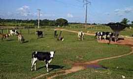 Caroebe - Caroebe-RR-Área rural-Foto:Tiago Orihuela