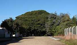 Arambaré - Arambaré-RS-Figueira da Paz-Foto:Henrique de BORBA