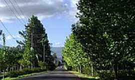 Araricá - Estrada arborizada em Araricá-Foto:Susy Dienstbach