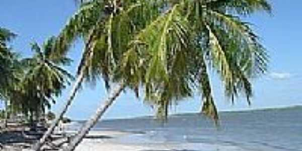 Janda�ra-BA-Coqueiros no praia-Foto:milevo.com.br
