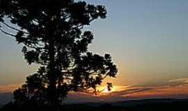 Boa Vista do Sul - Araucária - foto Rolf