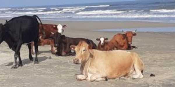 Nunca tinha visto vacas tomando banho de sol!!!!, Por maria leon