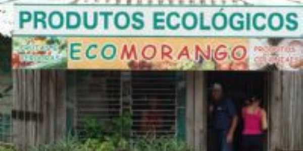 Ecomorango e casa Artesão, Por Adriana Steffen