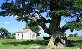 Ca�apava do Sul - Tapera e Velha �rvore-Foto:Darlan Corral