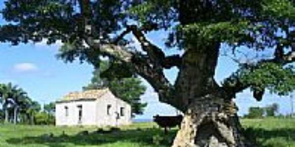 Tapera e Velha Árvore-Foto:Darlan Corral