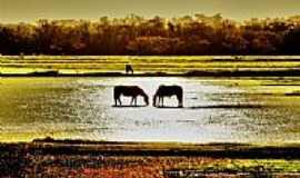 Cachoeirinha - Os cavalos no arrozal em Cachoeirinha-RS-Foto:André da Silva Aguia…