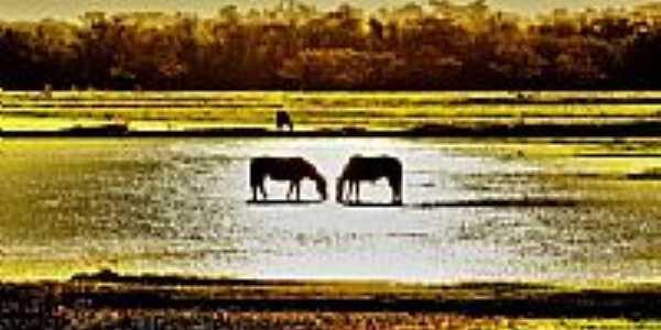 Os cavalos no arrozal em Cachoeirinha-RS-Foto:André da Silva Aguia…