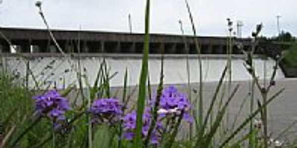 Flores no gramado do Vertedouro da Barragem em Camaquã-Foto:Henrique de BORBA