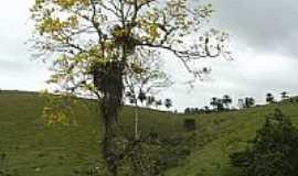 Jitaúna - Ipê Amarelo, por quinta de oliveira