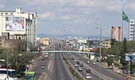 Canoas - Avenida - Foto:eco.patas