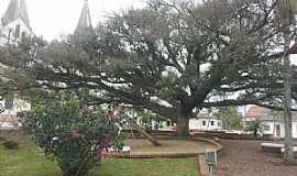 Capela de Santana - Capela de Santana-RS-Linda árvore na Praça da Matriz-Foto:Maria Teresa Casteleiro Schally