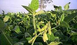 Capo-Erê - Plantação em Capo-Erê-Foto:udlutl
