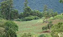 Cerro Branco - Lavoura-Foto:Rafael Igor Fritz