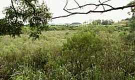 Chiapeta - Chiapeta-RS-Vista da região-Foto:geraldo col