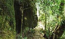 Cotiporã - Cotiporã-RS-Trilha da Cascata dos Marins-Foto:Adao Wons