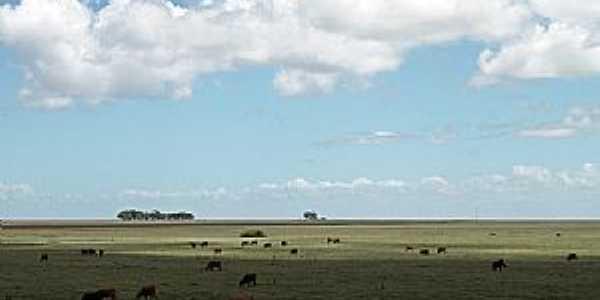 Curral Alto-RS-Campos de pastagem da região-Foto:Igor Sperotto