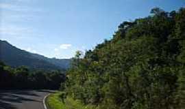 Dois Irm�os - Rodovia na serra em Dois Irm�os-RS-Foto:Elisa Nascimento